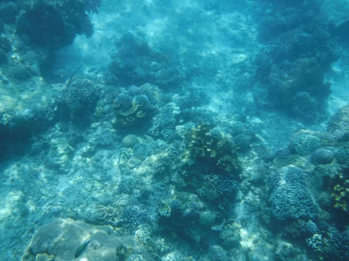 レンボンガン島シュノーケリング3